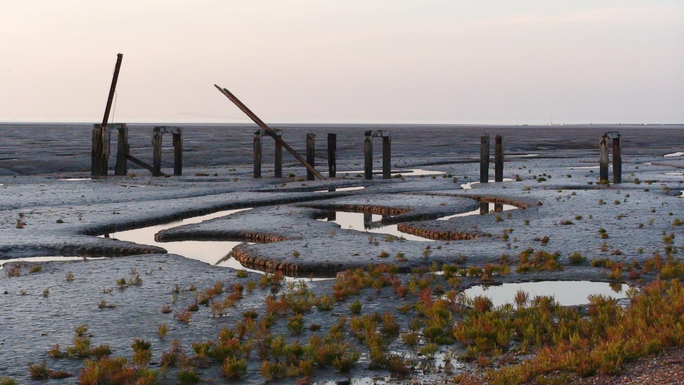 Norfolk wetlands